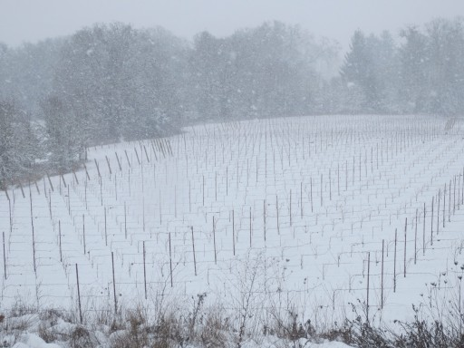snow-in-the-vineyard