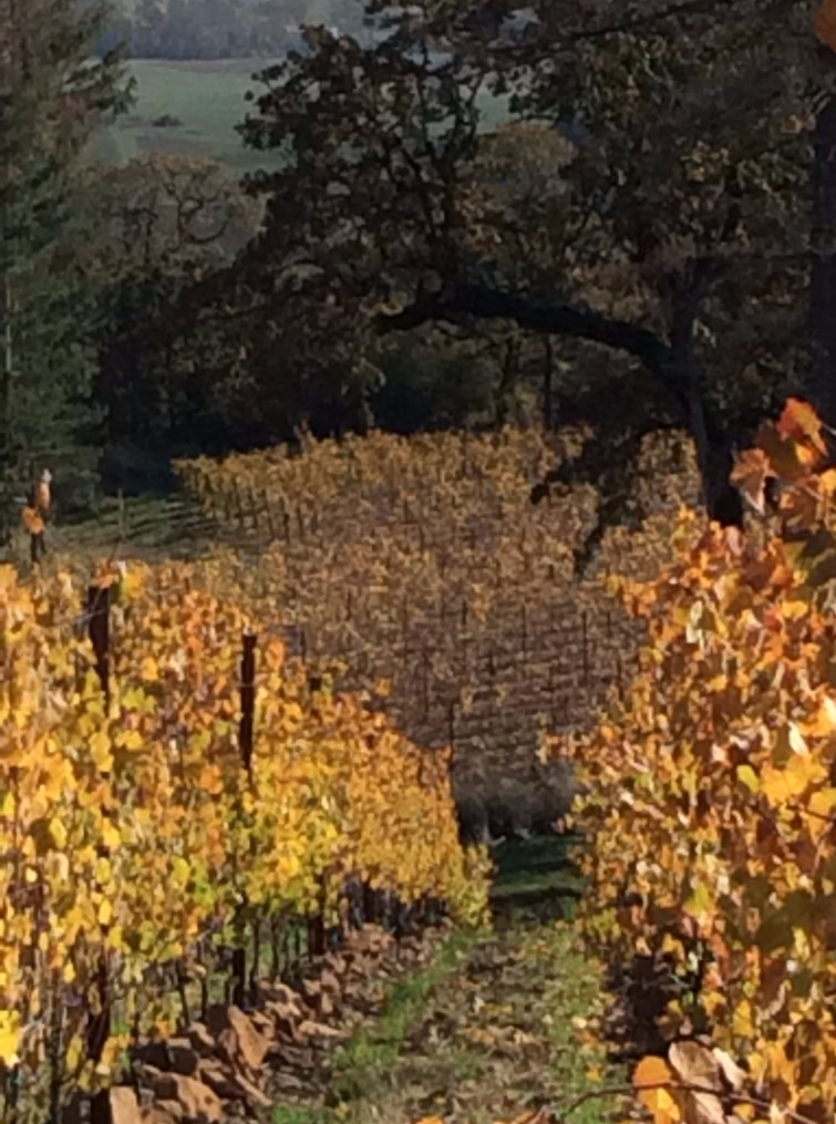 thanksgiving_2016_vinyard_cropped